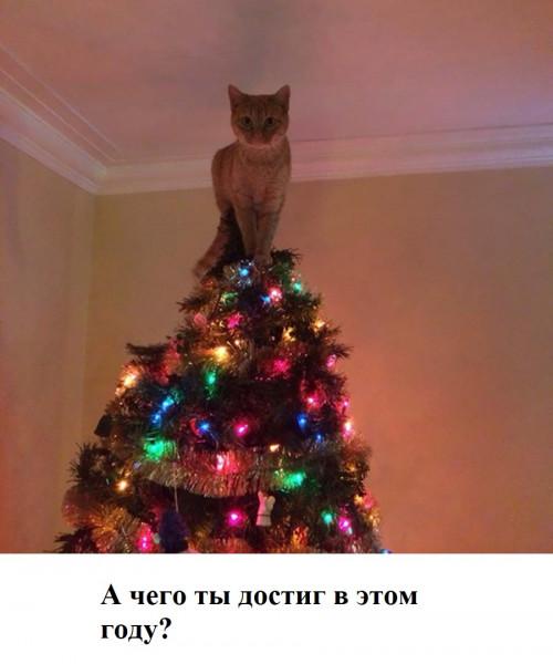 Мем: Символ года