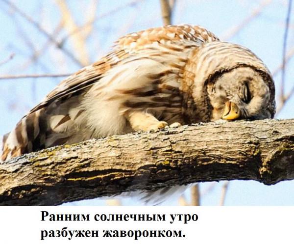 Мем: птицы