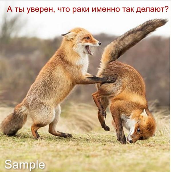 """Мем: """"Поза львицы"""", leva"""