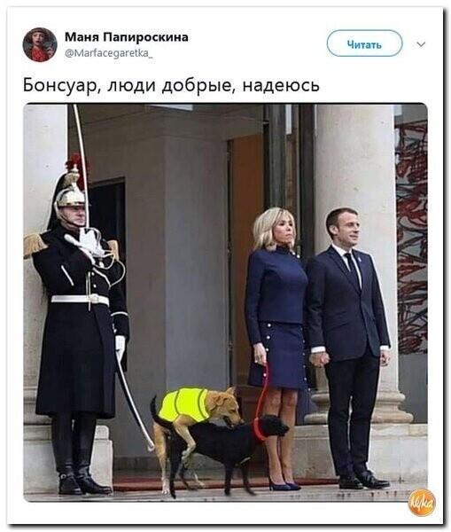 Мем: Жёлтые жилеты атакуют, Criptor