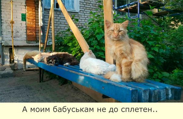 Мем: Мачо