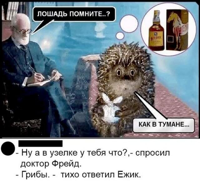 Мем: Ежик в тумане, Максим Камерер