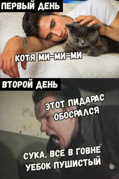 Мем: Когда завёл кота, Кот Отморозкин