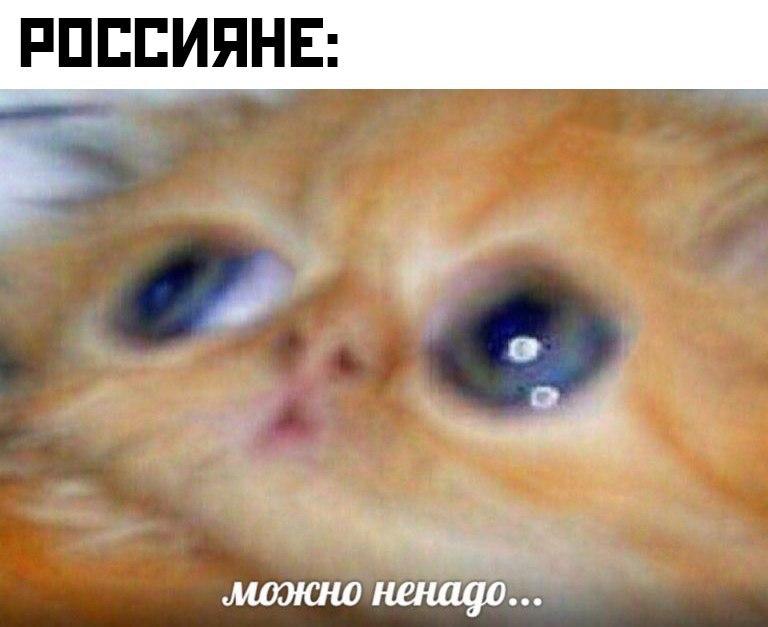 Мем, orntag
