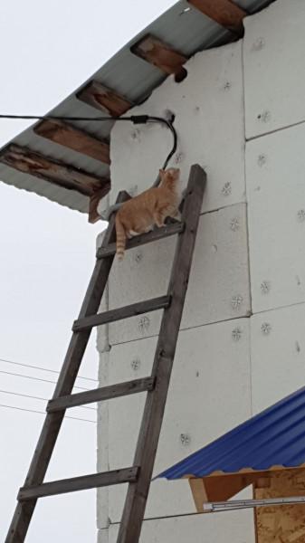 Мем: Весна. Кошки прилетели, Виль Максютов