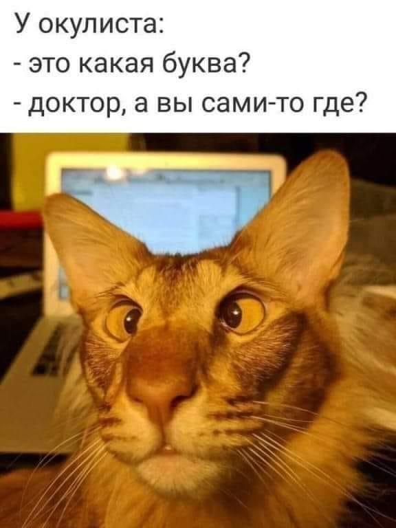 Мем, Умка
