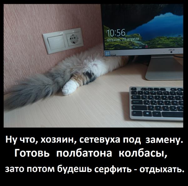 Мем: Котосервис, Пантелеич