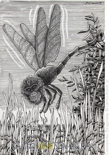Карикатура: эволюция, Семеренко Владимир