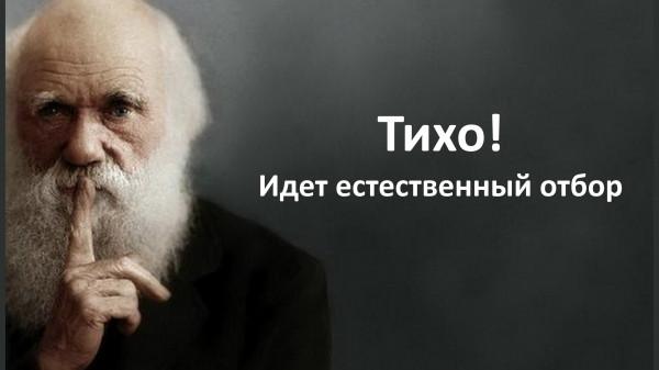 Мем: Идет отбор, Vladimir Matveev