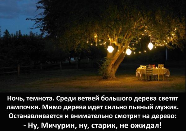 Мем: Лампочки на дереве, Vladimir Matveev
