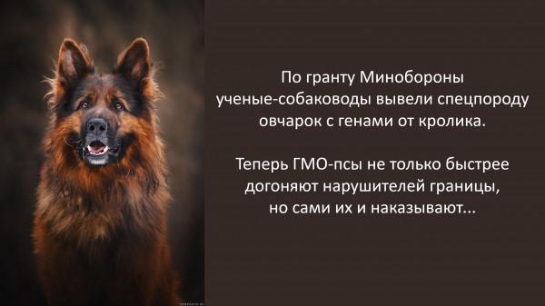 Мем: Овчарки-кролики, Vladimir Matveev