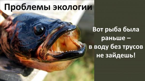 Мем: Вот раньше была рыба