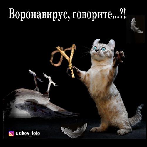 Мем: хозяева достали карантином, Узиков Александр