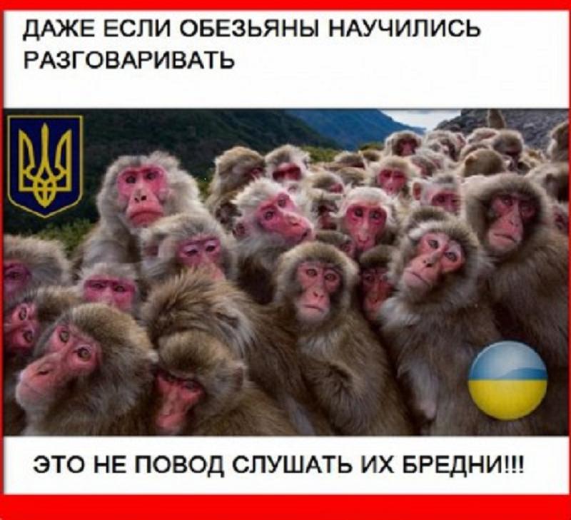 Мем: Андрюне посвящается., Максим Камерер