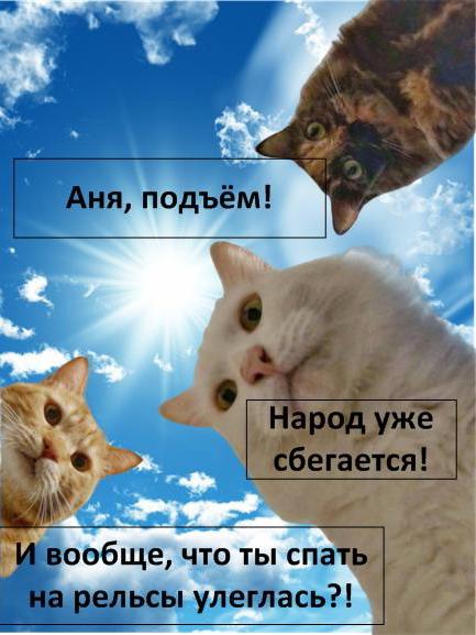Мем: Коты Анны К.