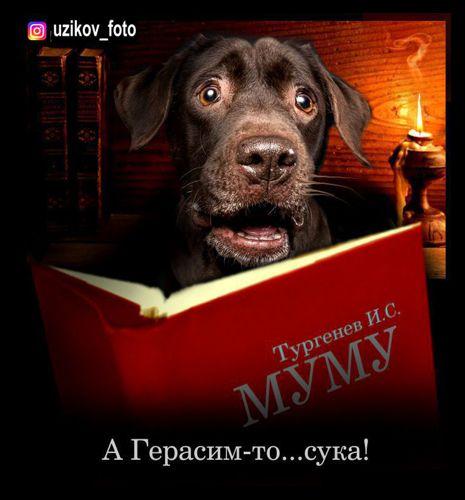 Мем: на карантине..., Узиков Александр