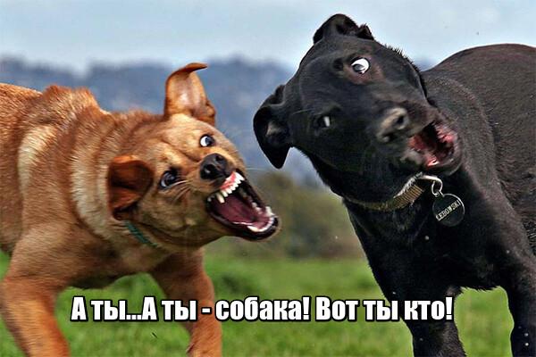 Мем: Если твои противники перешли на личные оскорбления, будь уверен - ты победил!