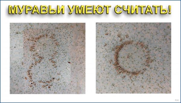 Мем: Цивилизация муравьёв сменит цивилизацию людей, Афоня Радостный