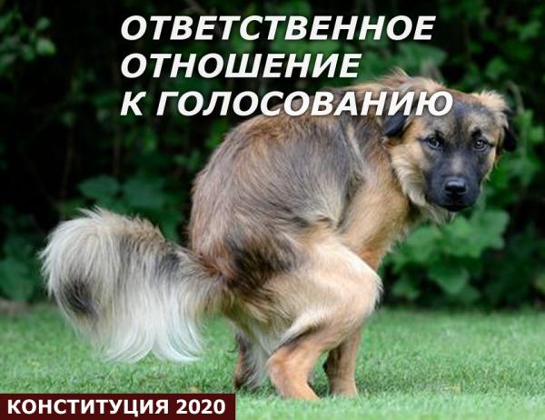Мем: Животное призывает к ответственному голосованию, Антипуть