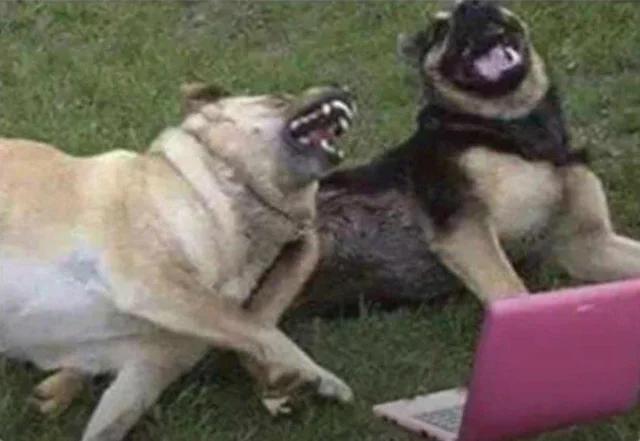 """Мем: А потом он сказал: """"Заходи, он не кусается"""". И я его укусил !!!"""