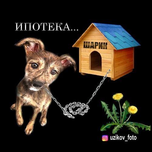 Мем: на цепи..., Узиков Александр