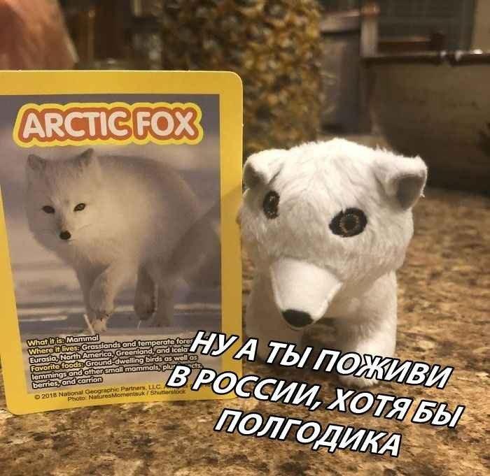 Мем: Песец-2, Лось Д и Компания