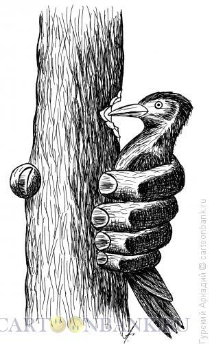Карикатура: дятел в руке, Гурский Аркадий