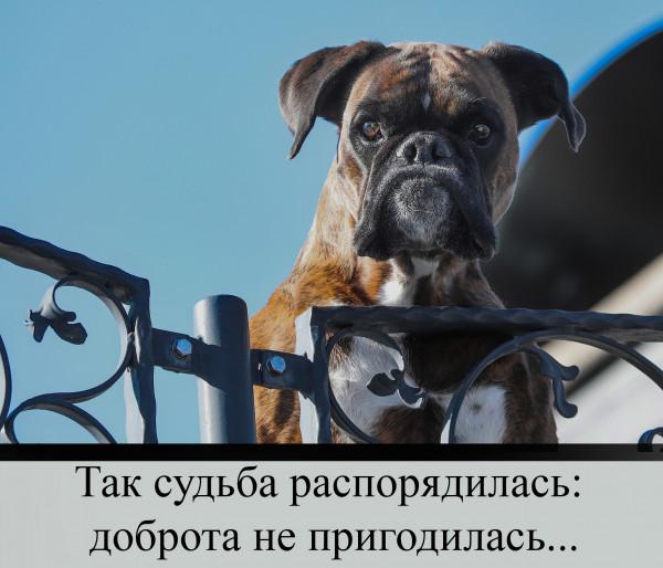 Мем: Сторожевой пес, СК Лейе