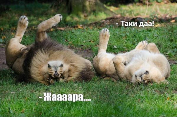 Мем: Одесские львы))), Дмитрий Свиридов