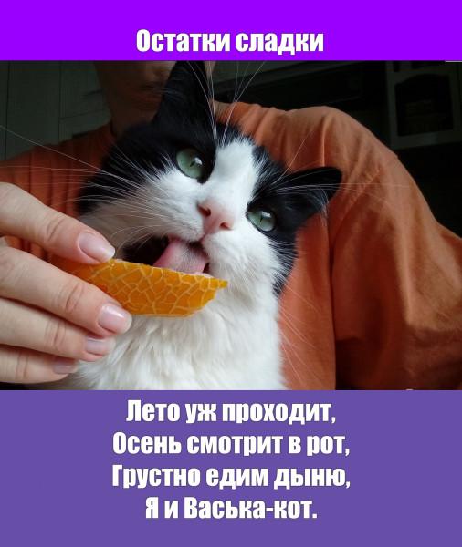 Мем: 31 августа