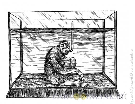 Карикатура: обезьяна, Гурский Аркадий