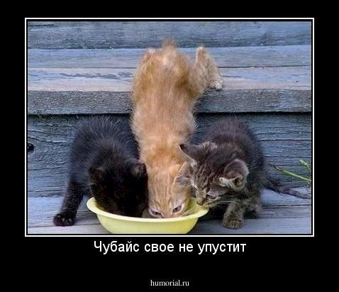 Мем, Оля Шефская