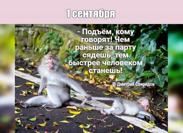 Мем: Первый звонок🔔, Дмитрий Свиридов