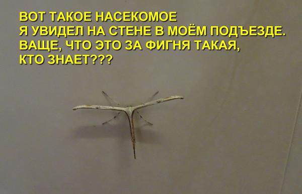 Мем: Это инопланетянин! А кто сказал, что они большие?, Афоня Радостный