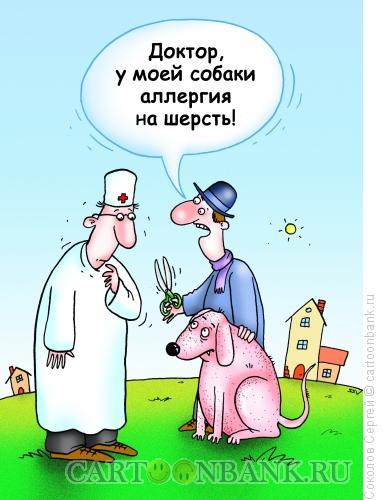 Карикатура: собачья аллергия, Соколов Сергей