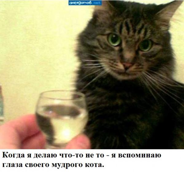 Мем: кот