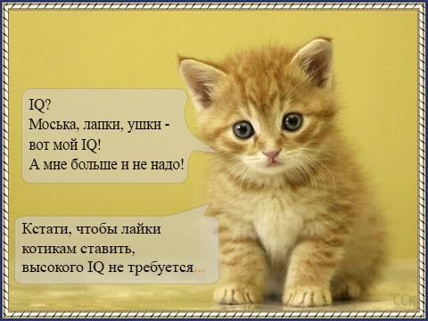 Мем: IQ котика, Серж Скоров