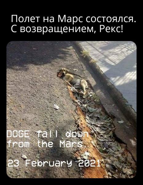 Мем: Хоть собаку с неба, Piter piter SPB
