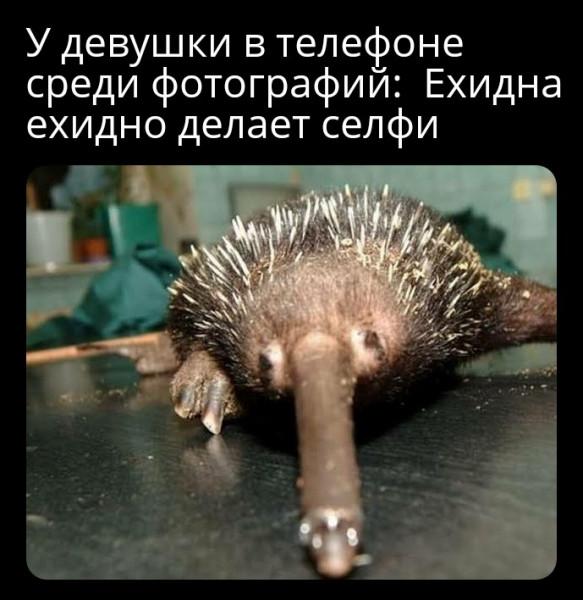Мем: Ехидно делает селфи, Piter piter SPB