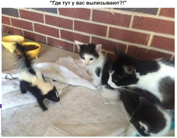 Мем: Кошечки