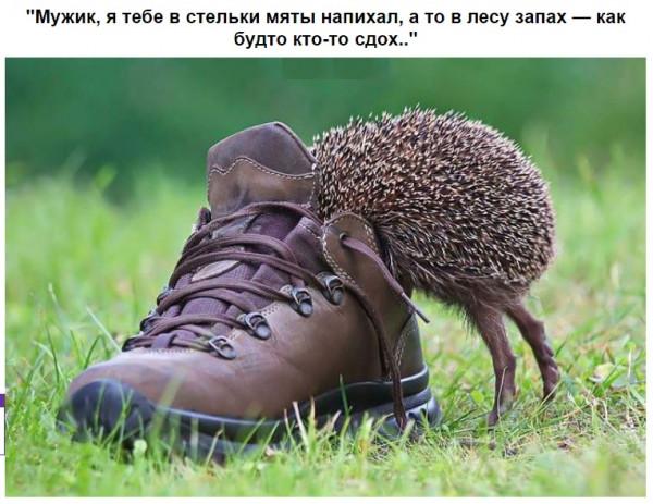 Мем: Ёжик