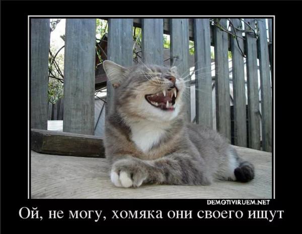 Мем: Бытовуха