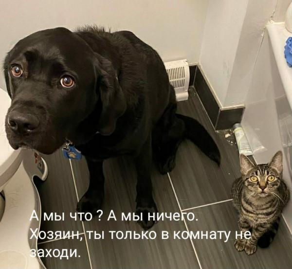 Мем, tet