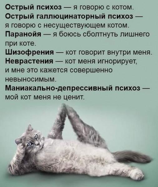 Мем: Коты в психиатрии