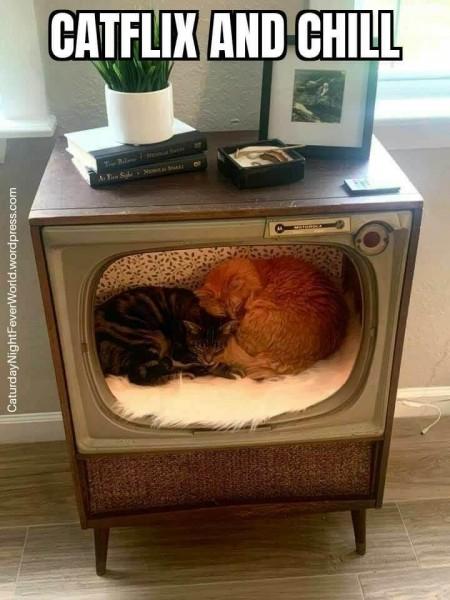 Мем: Жизнь в телевизоре существует!, fghjkl