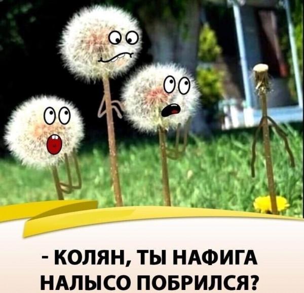 Мем: Колян)), Бауэр СО
