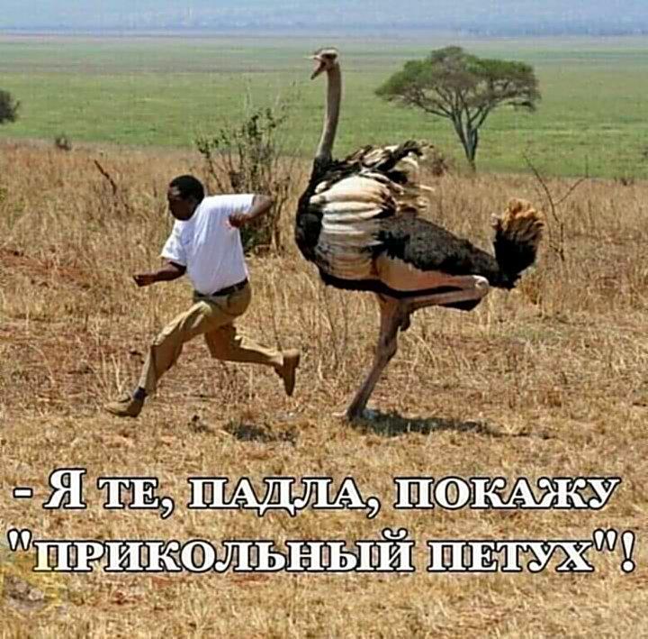 Мем: В мире эивотных, АндрейА