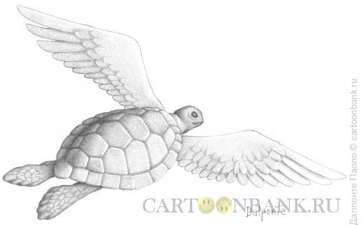 Карикатура: fling turtle, Далпонте Паоло