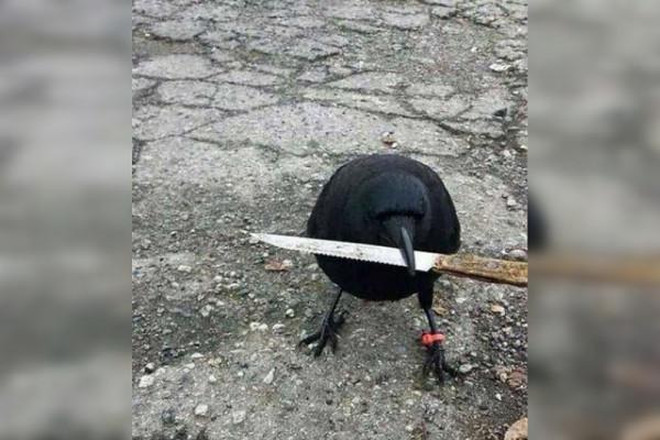 Мем: Вооружён и очень опасен, Criptor
