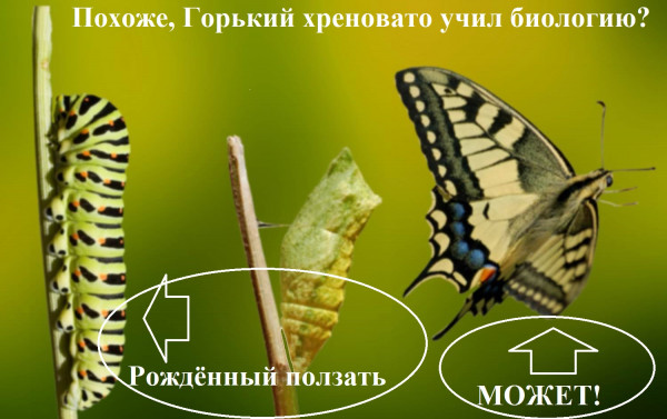 Мем, Генрих Монт